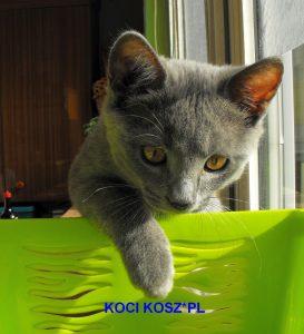 koty-kartuskie;koci kosz*pl